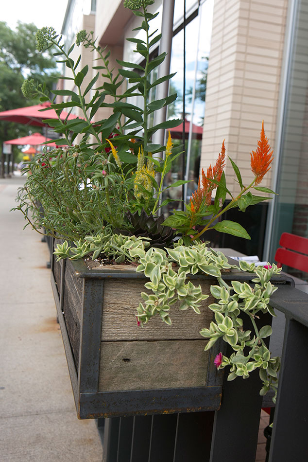 Hanging Planters for North, restaurant in Cherry Creek, Denver
