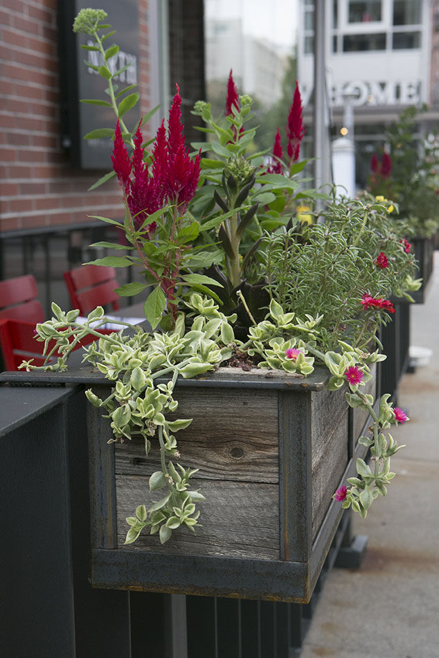 Hanging Planters For North A Restaurant In Cherry Creek