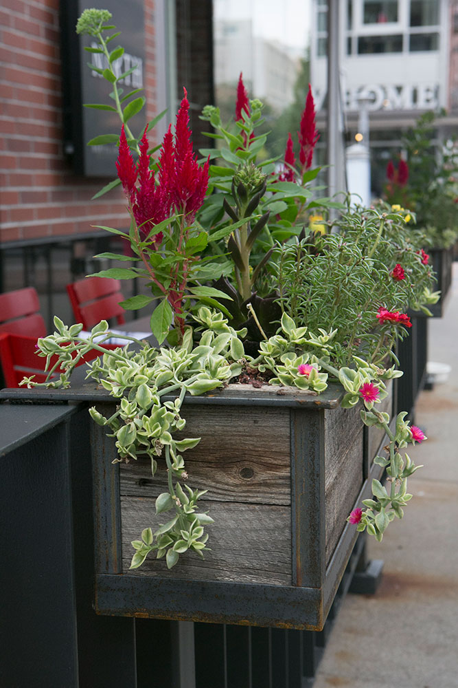 Modern Railing Planters Custom By Rushton